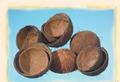 Coaja de cocos 11buc