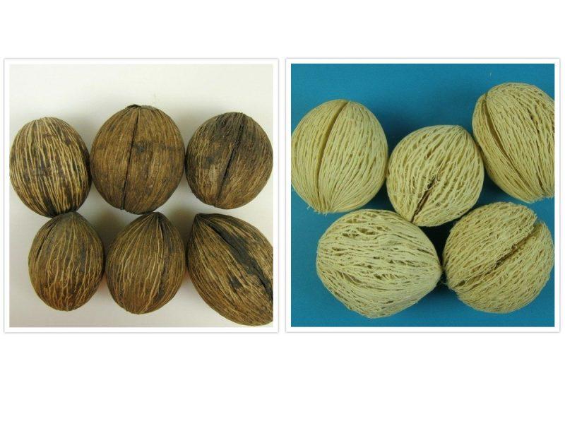 Mintola 7-9cm