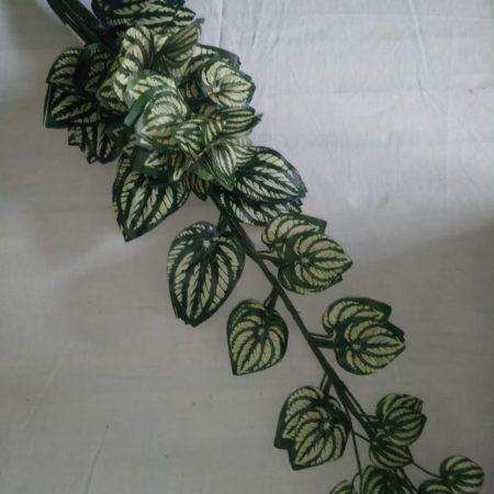 Frunze 70cm