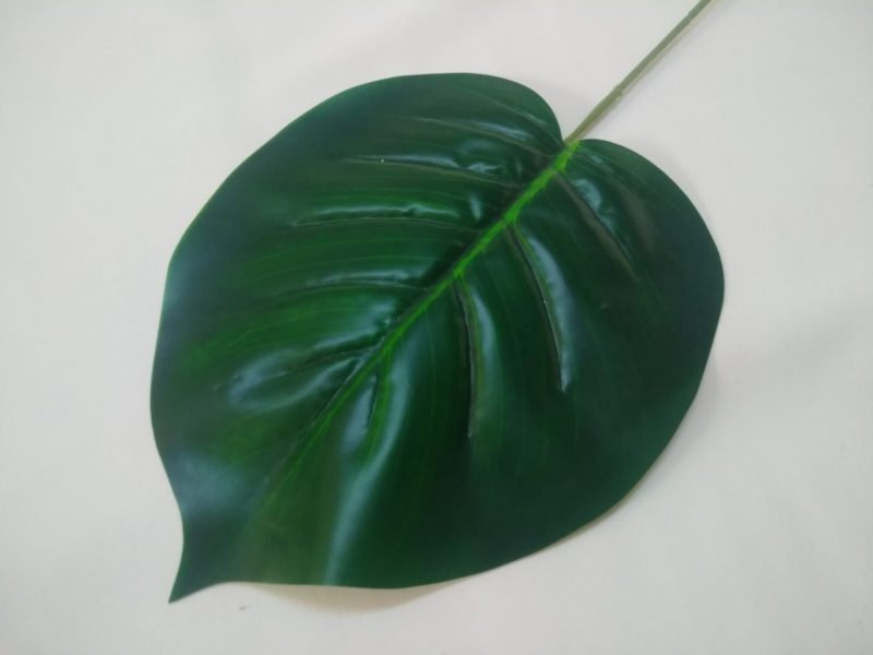 Frunza Philodendron