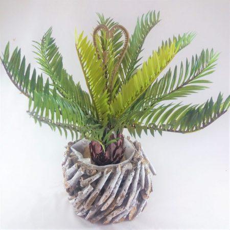 Palmier Cycas 30cm