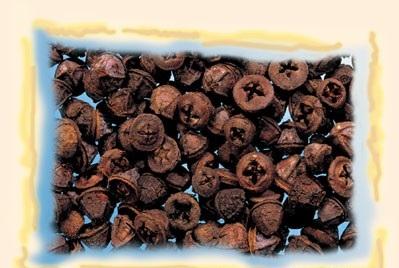 Fruct de eucalipt