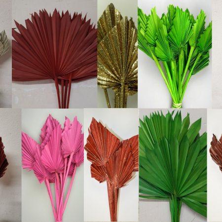 Frunze de palmier 6-13 buc
