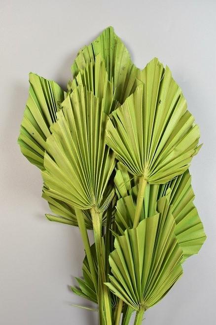 Frunze de palmier -