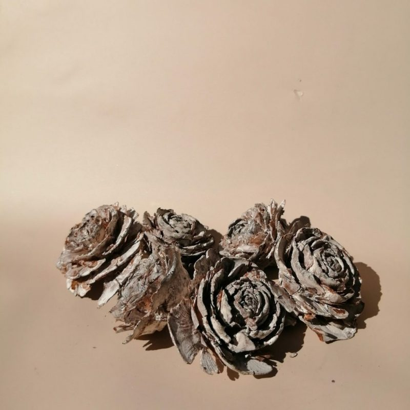 Trandafiri con cedru -
