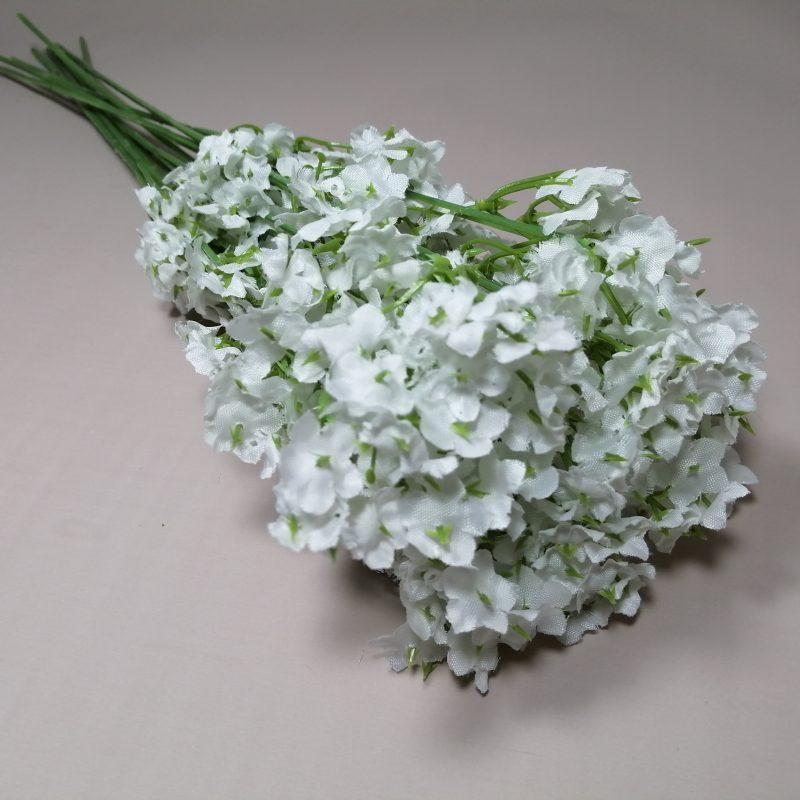Gipsofila paniculata -