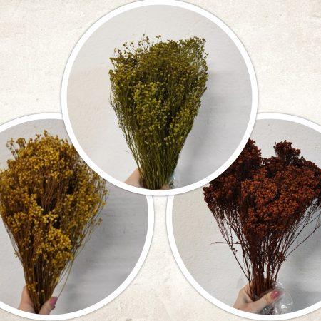 Broom Bloom 100 g