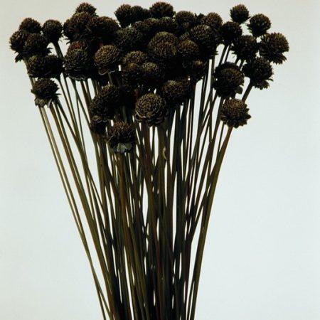 Negro natur 270 g