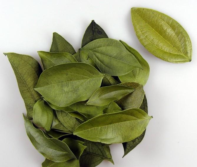 Frunze catifelate -