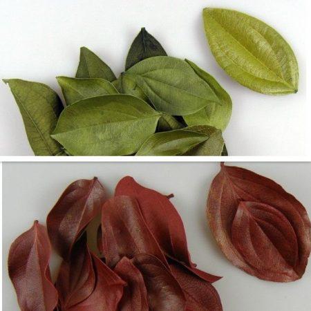 Frunze catifelate 60 g