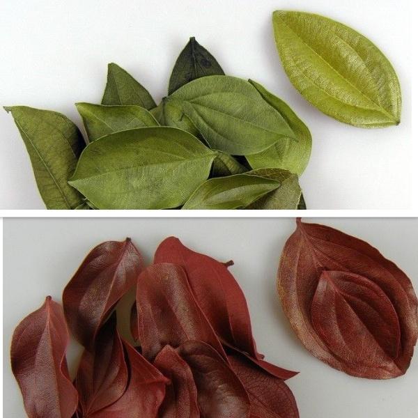Frunze catifelate