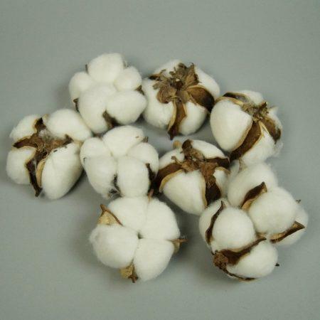 Flori de bumbac 15buc