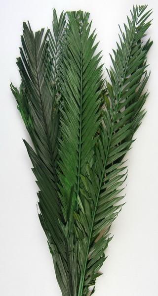 Frunze palmier 10buc