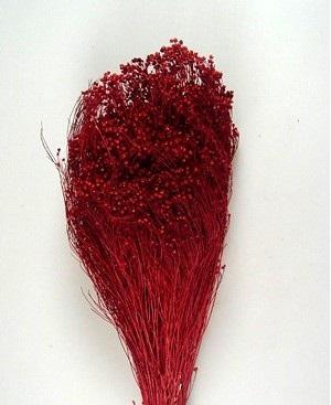 Broom Bloom -