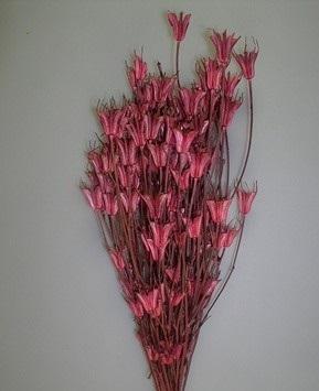 Nigella orientale 100g -
