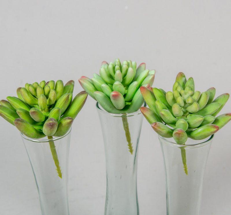 Plante suculente 8 cm -