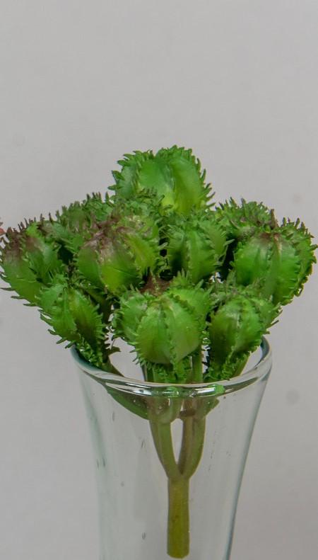 Cactus 10 cm -