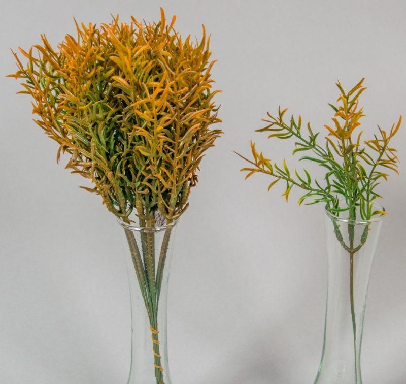 Asparagus 25cm -