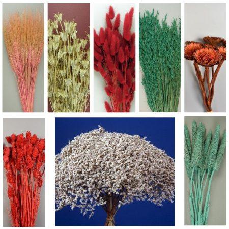 Flori-Plante