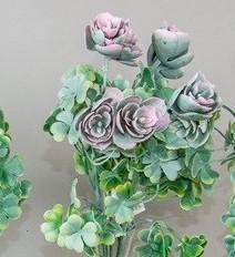Planta suculenta cu trifoi -