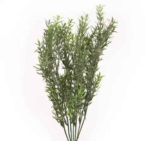 Asparagus 7 crengute -