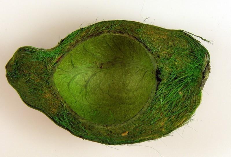 Nuca de cocos -