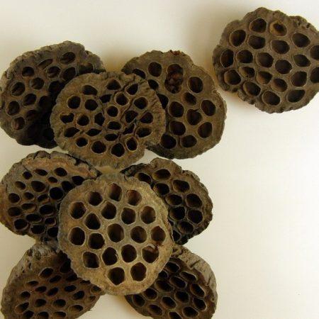 Fruct lotus 10cm