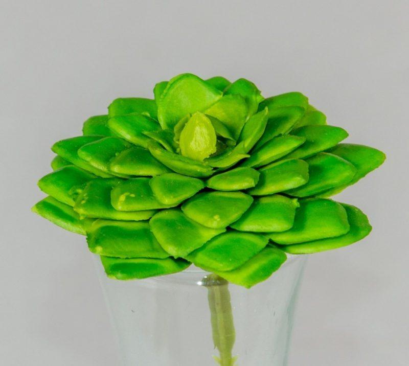 Planta suculenta 6,5 cm