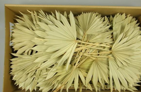 Frunze de palmier mini -