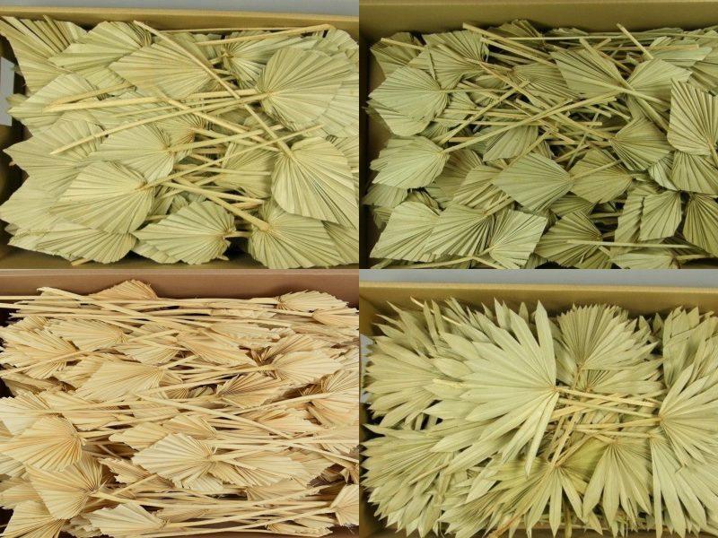 Frunze de palmier mini