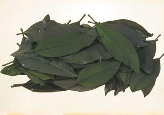 Frunze magnolie