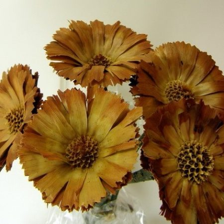 Protea rozetta