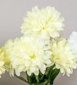 Buchet 5 crizanteme -