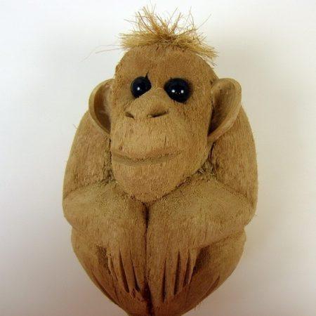 Maimuta cocos 50