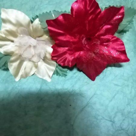 Craciunita 12/12 cm