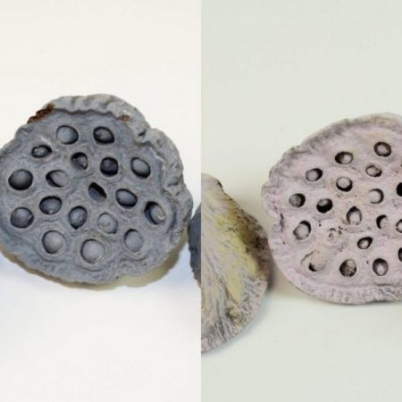 Fruct lotus 4-6cm