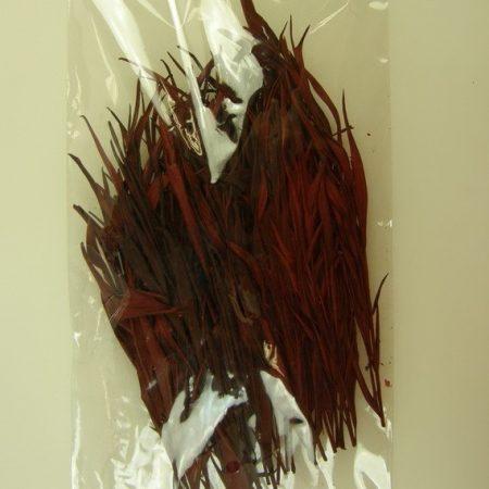 Frunze de Gravellia deculoare roșie