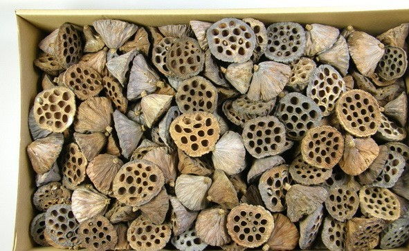 Fruct lotus 6-8 cm