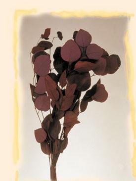 Frunze rotunde de eucalipt bordo 150g
