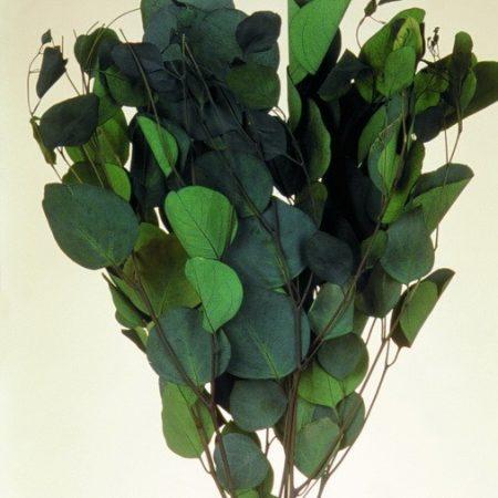 Frunze de eucalipt verde 150 g