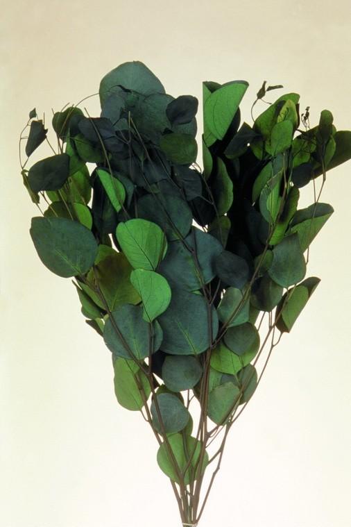 Frunze de eucalipt 150 g