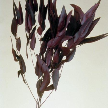 Frunze lance de eucalipt bordo 150 g