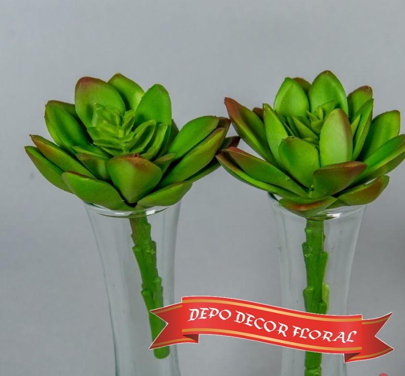 Planta suculenta 13 cm