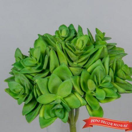 Planta suculenta 10 cm