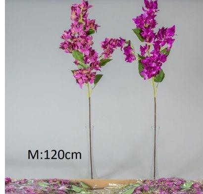 Bougainvillea 120 cm