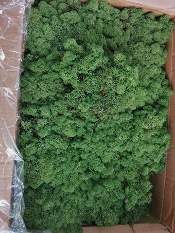 Licheni norvegieni medium green 70