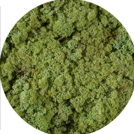 Licheni Norvegieni verde menta 66
