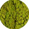 Licheni Norvegieni verde de primavara 55