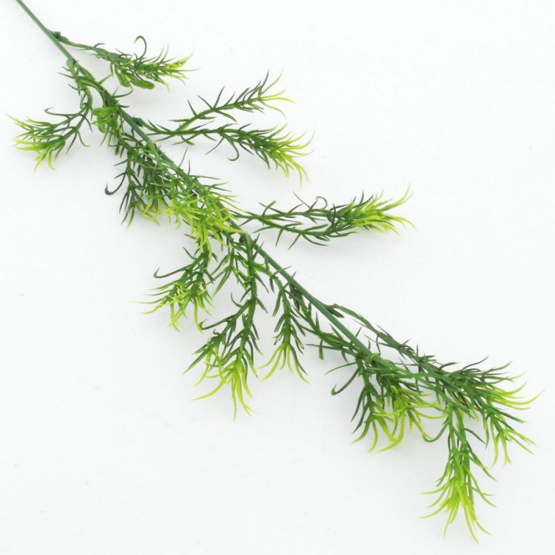 Asparagus 55 cm