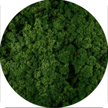 Licheni Norvegieni verde iarba 78